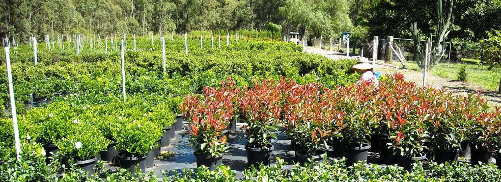 K & D STANI WHOLESALE NURSERY